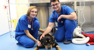 study veterinary medicine in Ukraine